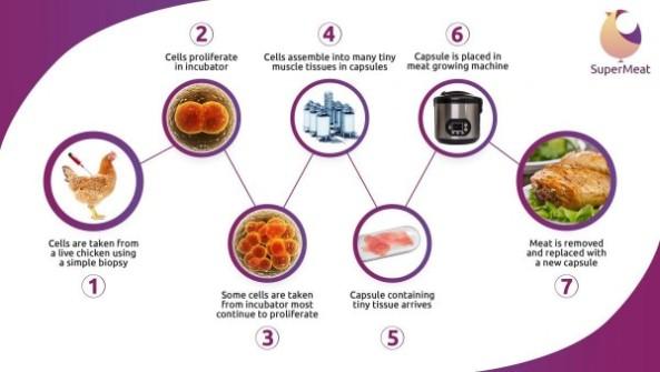 ciclo-carne-in-vitro